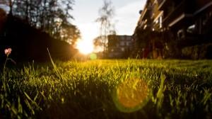 light_sunset_at_backyard__hd_wallpaper