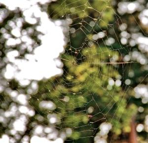 spider-web-bokeh